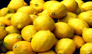 lemondexot1